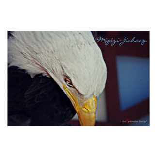 Migizi Bald Eagle is our Spirit Poster