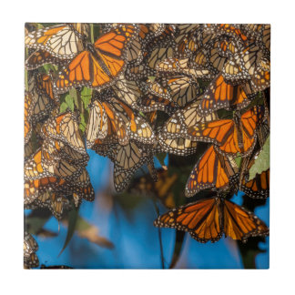 Migrating monarch butterflies cling to leaves tile