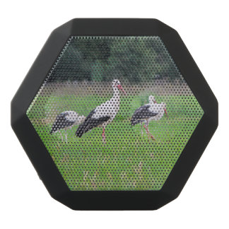 Migrating white storks, ciconia, in a meadow black bluetooth speaker