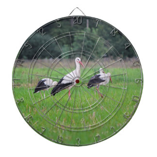 Migrating white storks, ciconia, in a meadow dartboard with darts