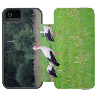 Migrating white storks, ciconia, in a meadow incipio watson™ iPhone 5 wallet case