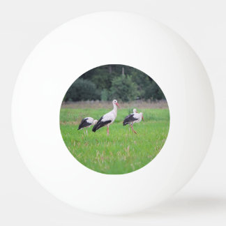 Migrating white storks, ciconia, in a meadow ping pong ball