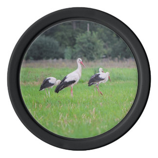 Migrating white storks, ciconia, in a meadow set of poker chips