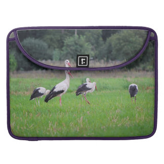 Migrating white storks, ciconia, in a meadow sleeve for MacBooks