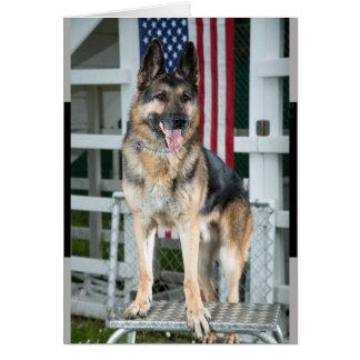 military dog. card