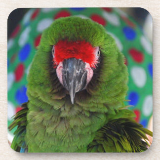 Military Macaw Beverage Coasters
