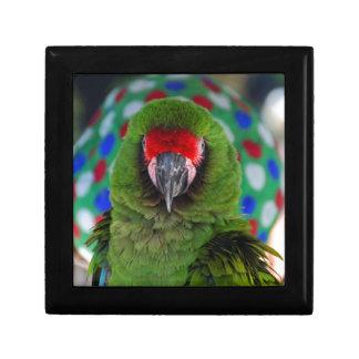 Military Macaw Keepsake Box