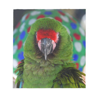 Military Macaw Notepad