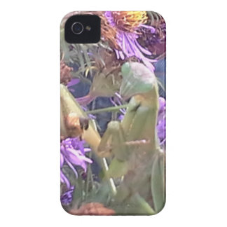 Milkweed beetles en masse exploration iPhone 4 case