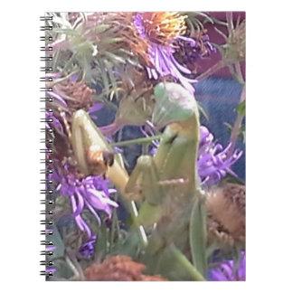 Milkweed beetles en masse exploration notebooks