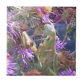 Milkweed beetles en masse exploration tile