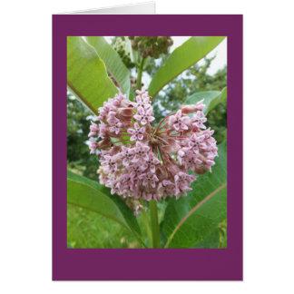 Milkweed Blank Note Card