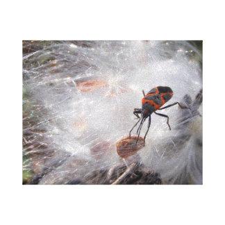 Milkweed Bug on Milkweed Down Canvas Print