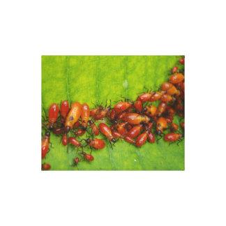 Milkweed Bugs on Milkweed Leaf Canvas Print
