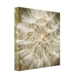 Milkweed Seed Pod Macro Canvas Print