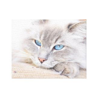 Millie Ragdoll Cat Canvas Print
