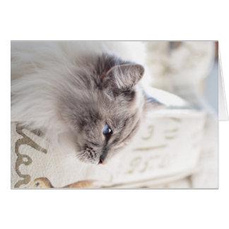 Millie Ragdoll Cat Card - resting