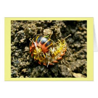 Millipede Polydesmida (Sigmoria aberrans) Items Greeting Card
