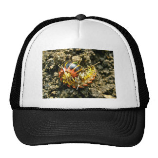 Millipede Polydesmida (Sigmoria aberrans) Items Mesh Hat