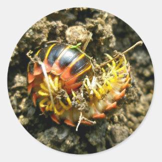 Millipede Polydesmida (Sigmoria aberrans) Items Classic Round Sticker
