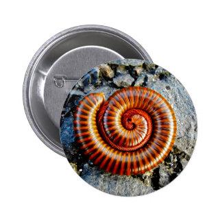 Millipede Trigoniulus Corallinus Curled Arthropod 2 Inch Round Button