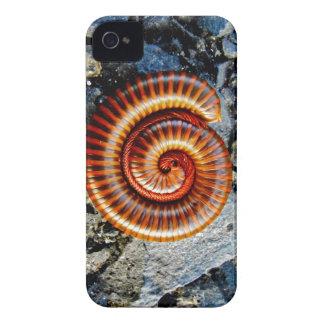 Millipede Trigoniulus Corallinus Curled Arthropod Blackberry Bold Cover