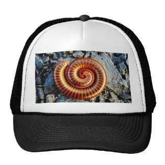 Millipede Trigoniulus Corallinus Curled Arthropod Hats