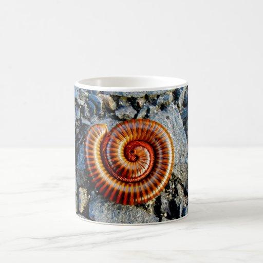 Millipede Trigoniulus Corallinus Curled Arthropod Coffee Mugs