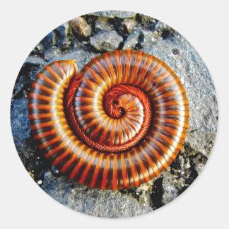 Millipede Trigoniulus Corallinus Curled Arthropod Round Sticker