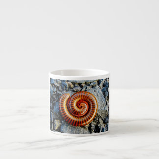 Millipede Trigoniulus Corallinus Curled Arthropod Espresso Cups