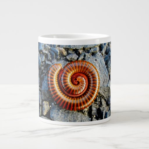 Millipede Trigoniulus Corallinus Curled Arthropod Extra Large Mug