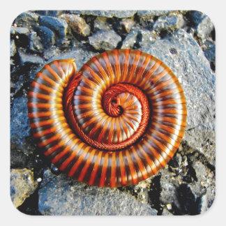 Millipede Trigoniulus Corallinus Curled Arthropod Square Sticker