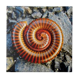 Millipede Trigoniulus Corallinus Curled Arthropod Tile