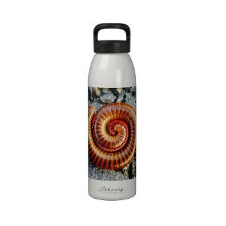 Millipede Trigoniulus Corallinus Curled Arthropod Drinking Bottles