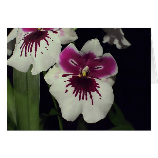 Miltonia hybrid orchid card
