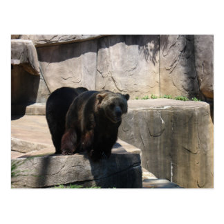 Milwaukee zoo bear postcard