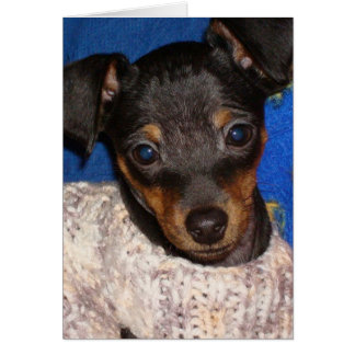 min pin in sweater.png card