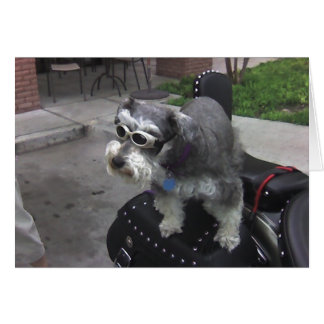 Minature Schnauzer BIKER Card