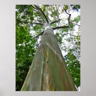 Mindanao Gum Tree Poster