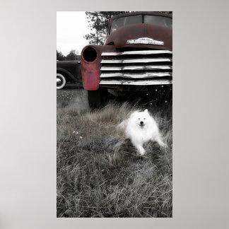 Mini American Eskimo Poster