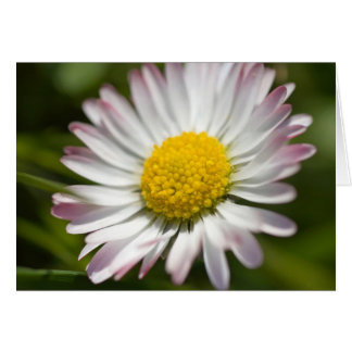 Mini Daisy Greetings Card