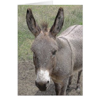 Mini- Donkey Card