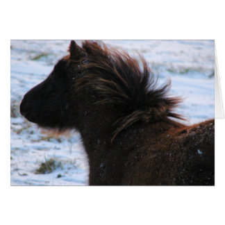 Mini Filly in Winter, Christmas Card