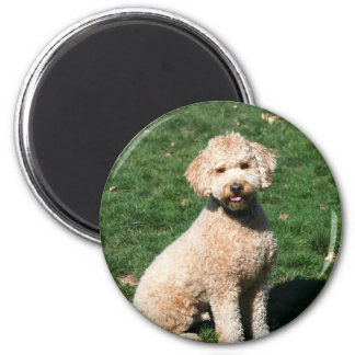 Mini Goldendoodle puppy magnet