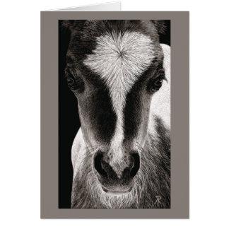 "Mini Horse Colt - ""Baby Face"" Card"