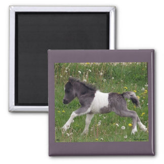 Mini Horse Magnet