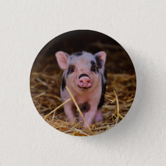 mini pig 1 inch round button