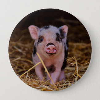 mini pig 4 inch round button
