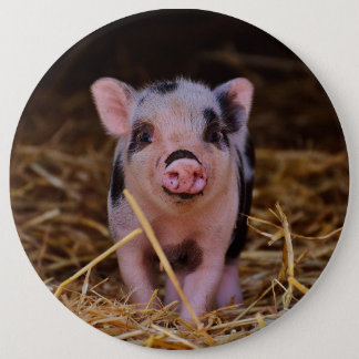 mini pig 6 inch round button