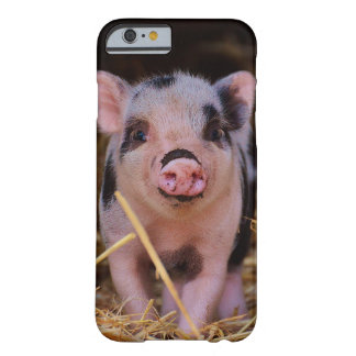 mini pig barely there iPhone 6 case